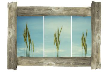 Alter Holzrahmen Korn Pflanzen Landschaft