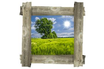 Kornfeld und Baum - Alter Holzrahmen Landschaft