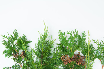 greenery for christmas on a white background