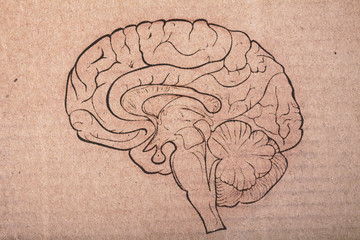 Human brain painted on the cardboard sheet