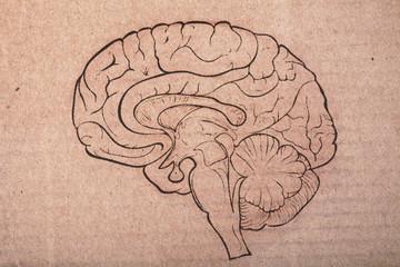 Human brain painted on the cardboard sheet