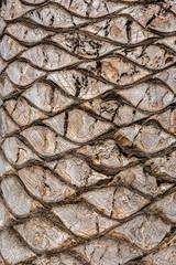Stamm einer Palme, Textur