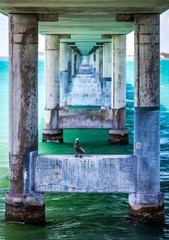 Pelican on 7 Mile Bridge in Florida