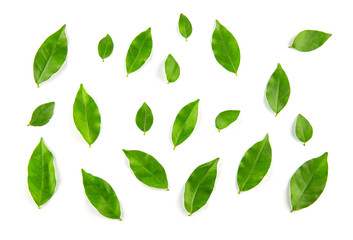 Collage of leaves on white background