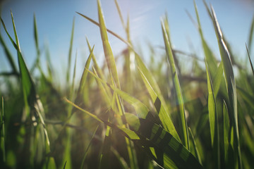 Close-up of blades of grass