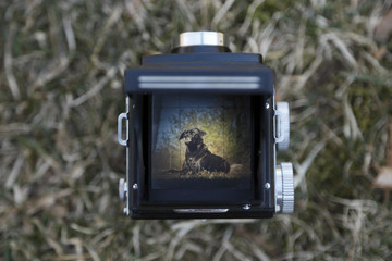 Twin lens reflex camera being used to take a photograph of a dog