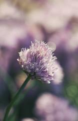 Small Purple Flower Macro