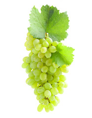 Bunch of grape on white background
