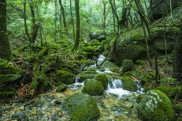 Shiratani Unsuikyo Valley, Yakushima, Japan