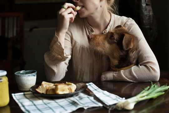 Woman eating pastry with dog on laps