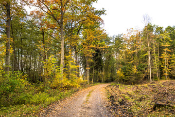 Scenery of forest in autumn, landscape with path between trees and colorful scenic nature at fall
