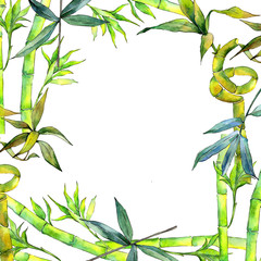 Tropical  bamboo tree frame in a watercolor style. Aquarelle wild bamboo tree for background, texture, wrapper pattern, frame or border.