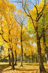 Park in autumn colors