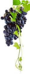 Wall Mural -  grappe de raisin rouge et pampre de vigne, fond blanc