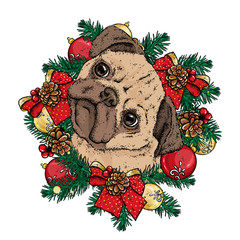 A little cute pug in a Christmas wreath with balls and bows. Vector illustration for a postcard or a poster. New Year's and Christmas. A handsome puppy. Pedigree dog.