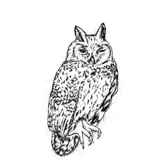 Beautiful owl. Vector illustration for a postcard or a poster.
