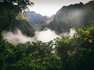 Rainforest of the Andes