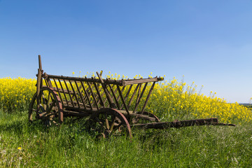 abandoned wooden wagon in front of a rapeseed field