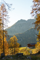 Fototapete - Wooden cottage in the Alps. Autumn landscape