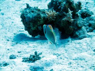 Unterwasser Ägypten
