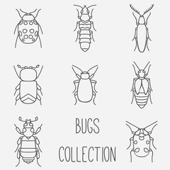 Bugs collection kit. Insects and beetles vector set