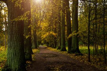 Beautiful autumn forest in Russia. The Park estate Rozhdestveno. Leningrad oblast.