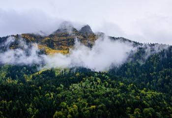 Autumn forest in Mestia,Georgia