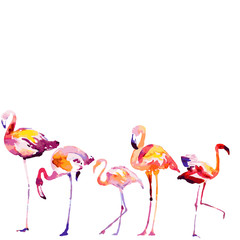 Beautiful watercolor flamingos, isolated on a white. Big set.