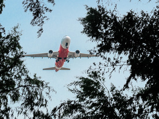 The taking off air plane view from the ground below through the tree brush