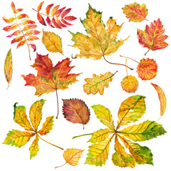 Autumn leaves set. Watercolor.