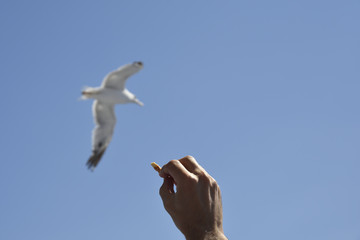 Hand holding a piece of food and a seagull in the air