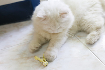 white persian cat is playing with yellow clothespin on ceramic floor