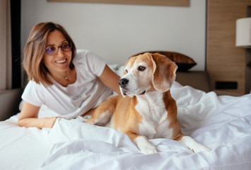 Lazy morning in bed - woman and her beagle dog meet morning