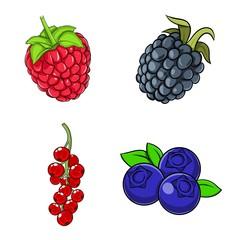 Beeren: Heidelbeere Blaubeere, Johannesbeere, Brombeere, Himbeere &
