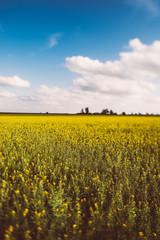 landscape with beauty sky on the fields