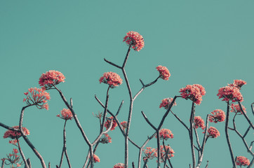 Exotic pink flowers against blue sky/background