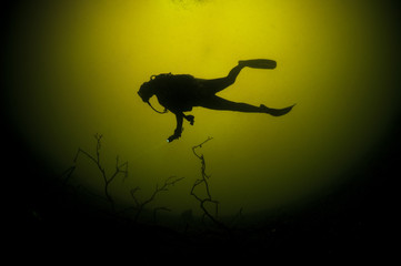 Scuba Diver and Tree in Silhouette