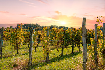 Photo sur Aluminium Vignoble vineyard of Jurancon in France with a sunset