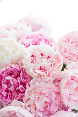 Fresh peony flowers colored in pale shades of pink close up isolated on white background