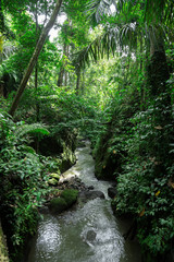 Green wild jungle forest and flowing river