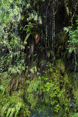 Tropical green vegetation in a moist mountain forest