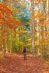 Woman walking into  beautiful autumn forest.