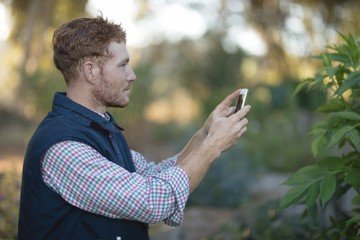 Farmer taking picture of plant with mobile phone
