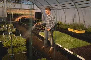 Farmer watering plants in greenhouse