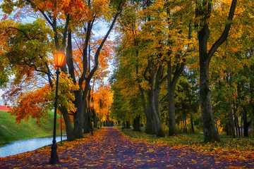 Autumn in evening park. Scenery autumn background. Colorful fall vivid.