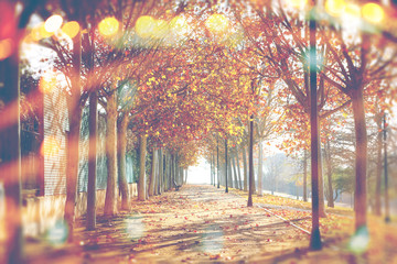 Autumn abstract background.Park and trees. Fall landscape in the city.Lens flare and sunbeam