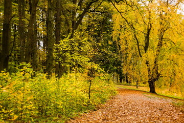 Autumn in Czech park
