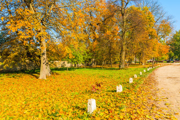 Trees with yellow color leaves in park in autumn season, Poland