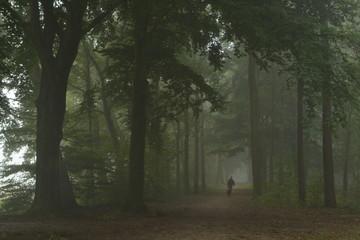 Wall Murals Dog wandelaar met hond in beukenlaan van de Kruisbergse bossen in de Achterhoek op en mistige dag