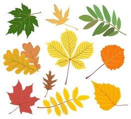 Set of colored autumn leaves. Vector illustration